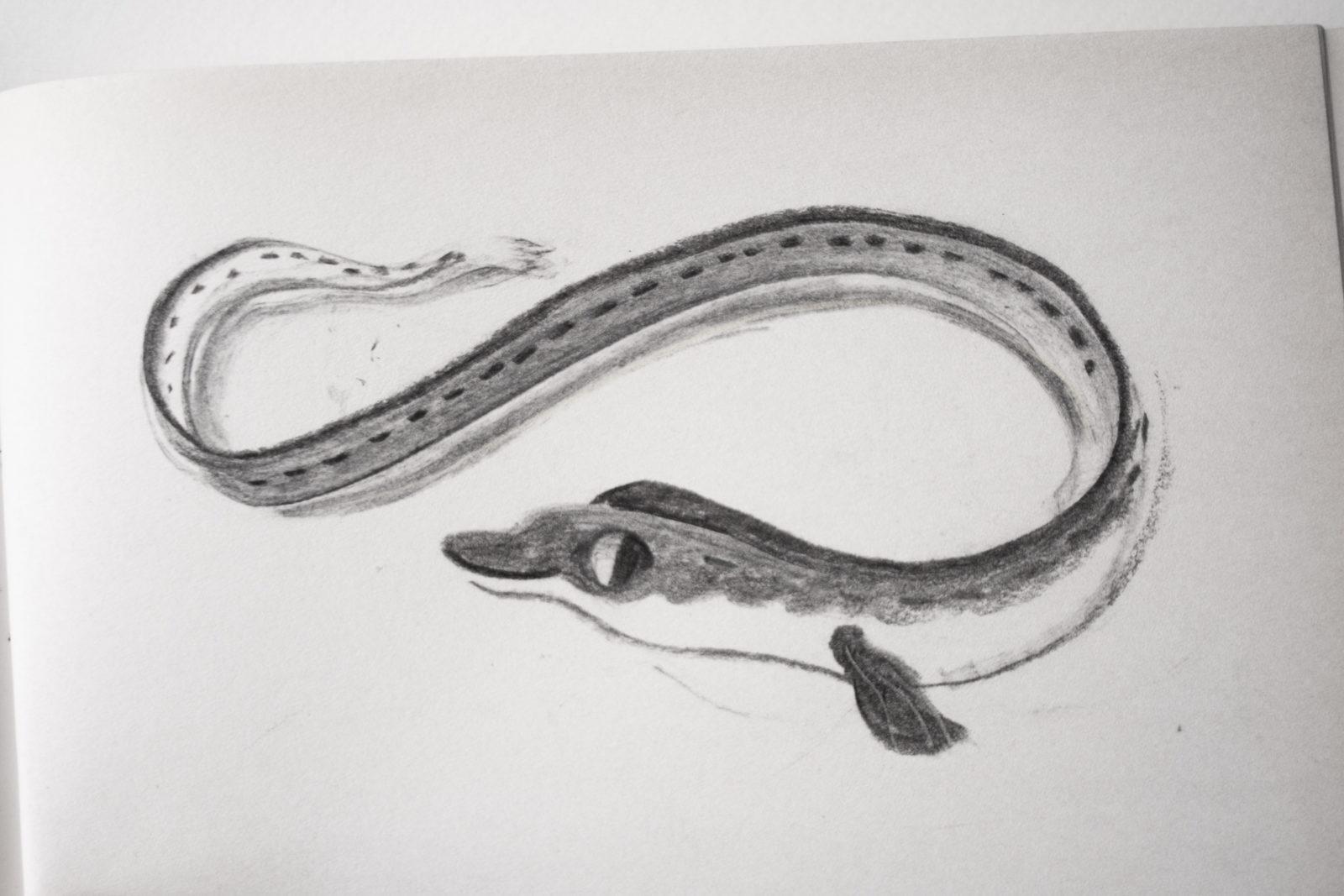 Eel by Pyhai