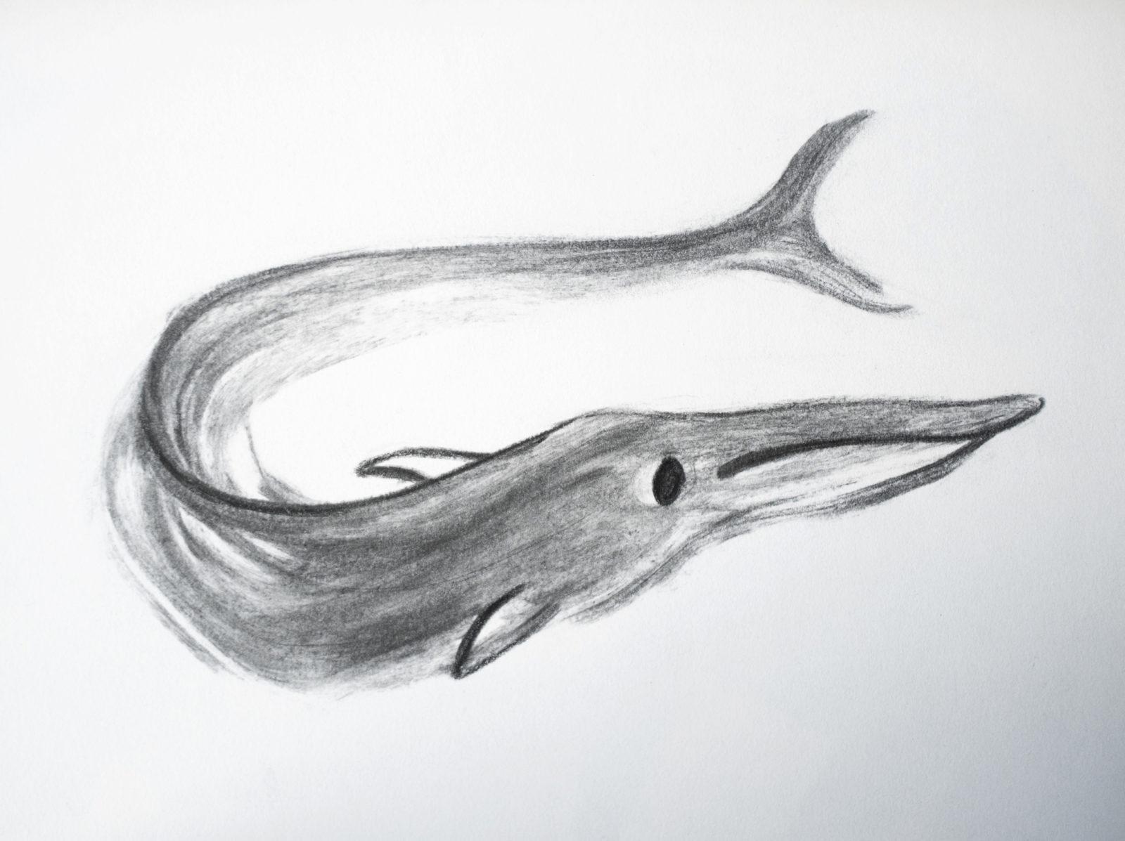 Whale by Pyhai